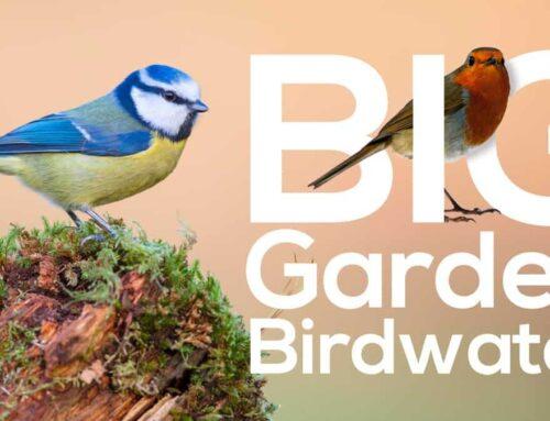 Willow Brook joins BBC's Big Garden Birdwatch